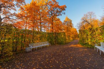 Golden autumn in Pushkin, Catherine park, Saint-Petersburg, Russia.