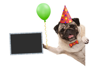 frolic smiling birthday party pug dog, with balloon and hat decoration holding blank blackboard sign, isolated on white background