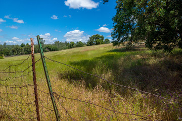Field and Fence-002