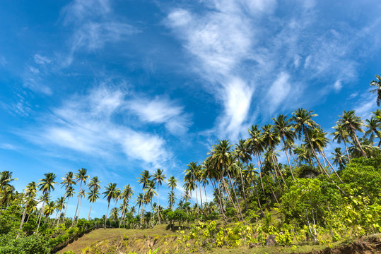 Beautiful blue sky with coconut palm trees at the hill