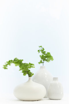 Still life of pottery vases with plants