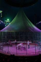 Cage with tigers on arena of circus