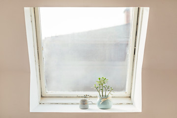 Flowers in a bowl on a window