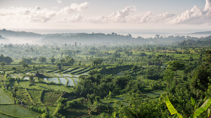 Beautiful view of rice fields in the morning
