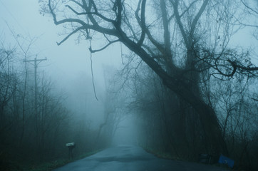 foggy road and tree