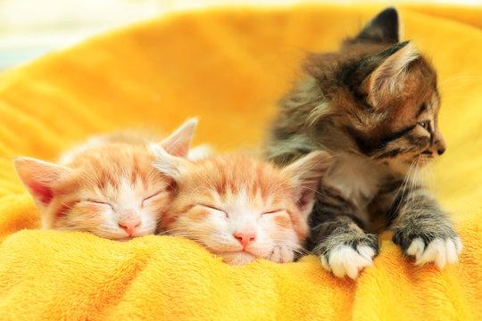 Cute little kittens on soft yellow blanket