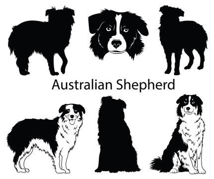 Australian shepherd set. Collection of pedigree dogs. Black white illustration of a australian shepherd dog. Vector drawing of a pet. Tattoo.