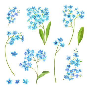 Forget me not flowers watercolor set