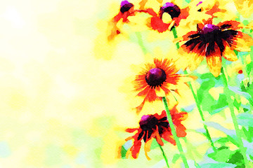 Digital art painting canvas - yellow toned rudbeckia flowers blooming in the garden (watercolor effect).