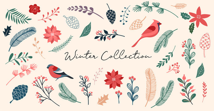 Botanical Christmas, Xmas elements, winter flowers, leaves, birds and pinecones isolated on white backgrounds