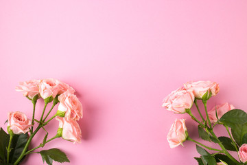 Pink rose flowers on pastel pink background