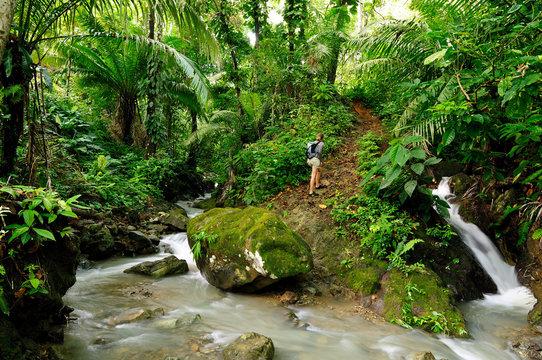 Wild Darien jungle near Colombia and Panama border. Central America.