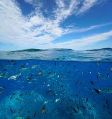 Seascape Mediterranean sea many fish underwater