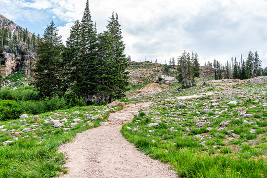 Albion Basin, Utah summer with landscape pine trees and green grass rocky meadow view and dirt road trail in Wasatch mountains to Cecret Lake