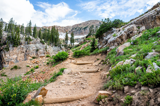 Albion Basin, Utah green summer with rocky trail steep hill up in Wasatch mountains to Cecret Lake and wildflowers