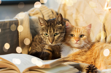 pets, christmas and hygge concept - two cats lying on sofa with book at home in winter