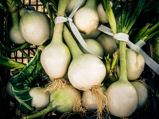 bunches of white onions in a box