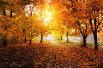 Garden Poster colorful trees and rural road in deep autumn forest, natural background