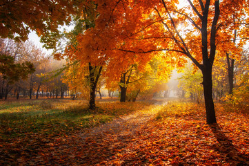 Foto op Canvas Landschappen colorful trees and rural road in deep autumn forest, natural background