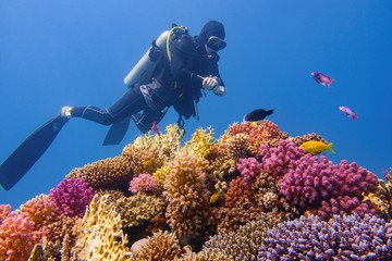Man scuba diver checking beautiful colorful healthy coral reef with diversity of hard corals