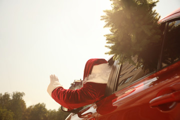 Authentic Santa Claus with fir tree driving modern car, back view