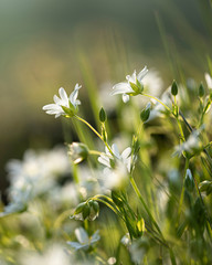 white flowers on green background