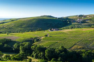 Vineyards close to Le Perreon village, Le Beaujolais, France