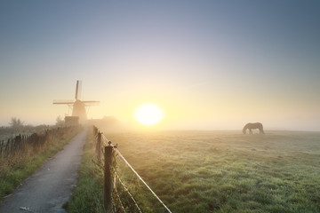 Wall Mural - misty gold sunrise with grazing horse and windmil
