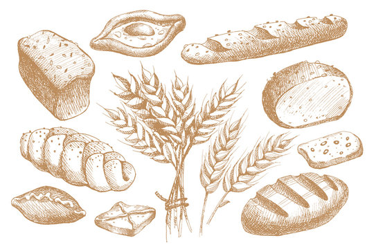 Set of hand drawn bakery products, pastries, loaves, long loaf and ears of wheat. Yummy buns for the bakery shop. Vector illustration on light isolated background.