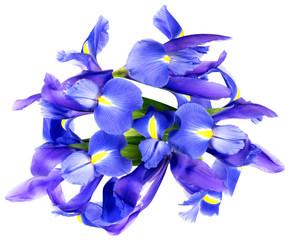 Blue Iris flowers on white background