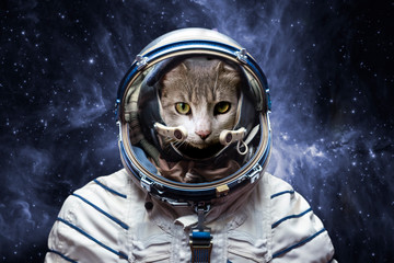 curious astronaut cat in outer space, explore the universe, elements of this image furnished by nasa