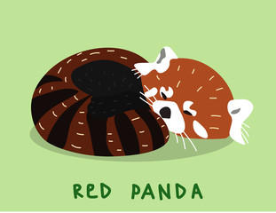 Cute little sleeping red Panda (little Panda). Hand-vector illustration in flat style. Perfect for illustrating books, animal signs in zoos, postcards, original t-shirt design.