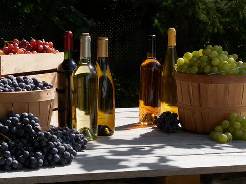 A garden harvest shot of red green and blue grapes outside in baskets in the sunshine with bottles of red and white wine