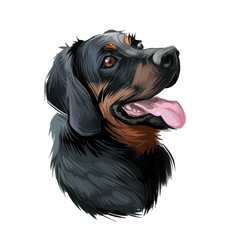 Polish Hunting dog portrait isolated on white. Digital art illustration of hand drawn dog for web, t-shirt print and puppy food cover design. Scenthound Gonczy Polski breed of scent hound, Poland.