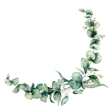 Watercolor eucalyptus border. Hand painted eucalyptus branch and leaves isolated on white background. Floral illustration for design, print, fabric or background.