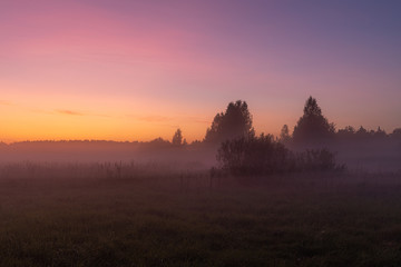 foggy sunset in the field