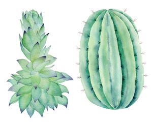 Green houseplants hand drawn watercolor raster illustration set