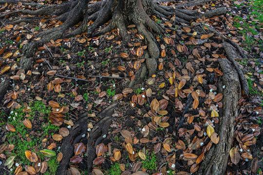 Magnolia Tree (collage), Cairo, Illinois