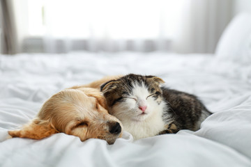 Adorable little kitten and puppy sleeping on bed indoors