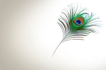 Papiers peints Paon peacock feather on white background with copy space