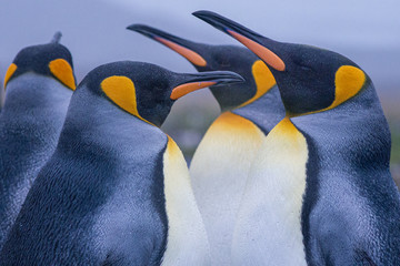 King Penguin Group