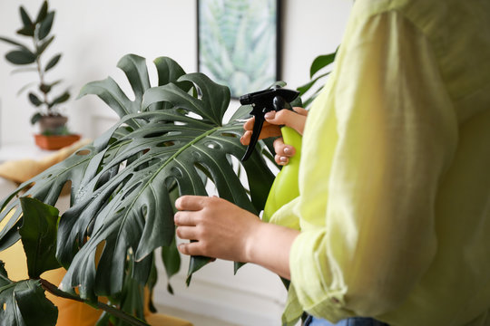 Young woman spraying water on houseplant at home, closeup