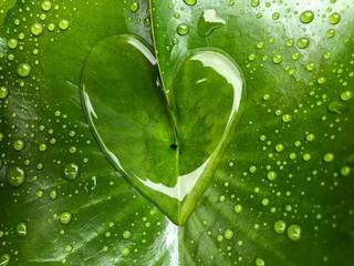 heart shape water drops on green leaf