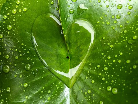 heart shape water drops on green leaf