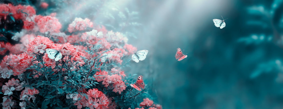 Mysterious fairytale spring or summer fantasy floral banner with rose flowers garden, flying peacock eye and blue butterflies on blurred beautiful background toned in soft pastel colors and sun rays