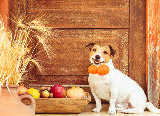 Festive season concept with dog and harvest of fruits, citruses and nuts