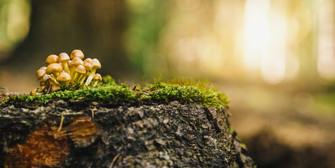 beautiful mushroom in grass on a tree trunk, autumn season. little fresh mushroom on moss, growing in Autumn Forest. copyspace for your individual text,