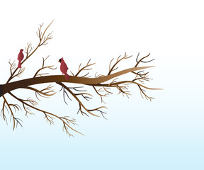 Branch tree and love red birds cardinals vector web image background template