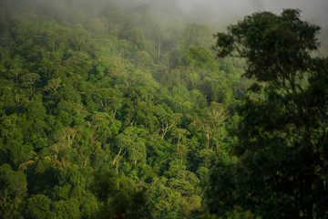 Photo sur Aluminium Jungle Forest and green trees in Thailand