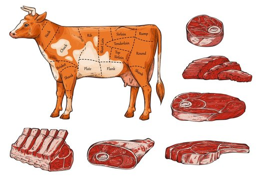 Set of beef meat and steaks, slices and a cow.